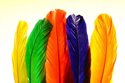 colorful_feathers_hd_picture_1_165549